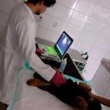 exame ultrassom abdominal veterinário