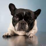 valor de acupuntura de cachorro Pacaembu
