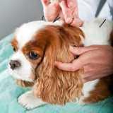 valor de acupuntura em cachorro com labirintite Santana de Parnaíba