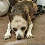 valores de acupuntura de cachorro Faria Lima