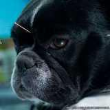 valores de acupuntura em animais Alphaville