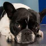valores de acupuntura em cães Santana