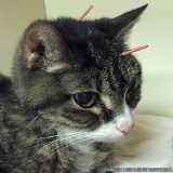 valores de acupuntura para gatos Alphaville