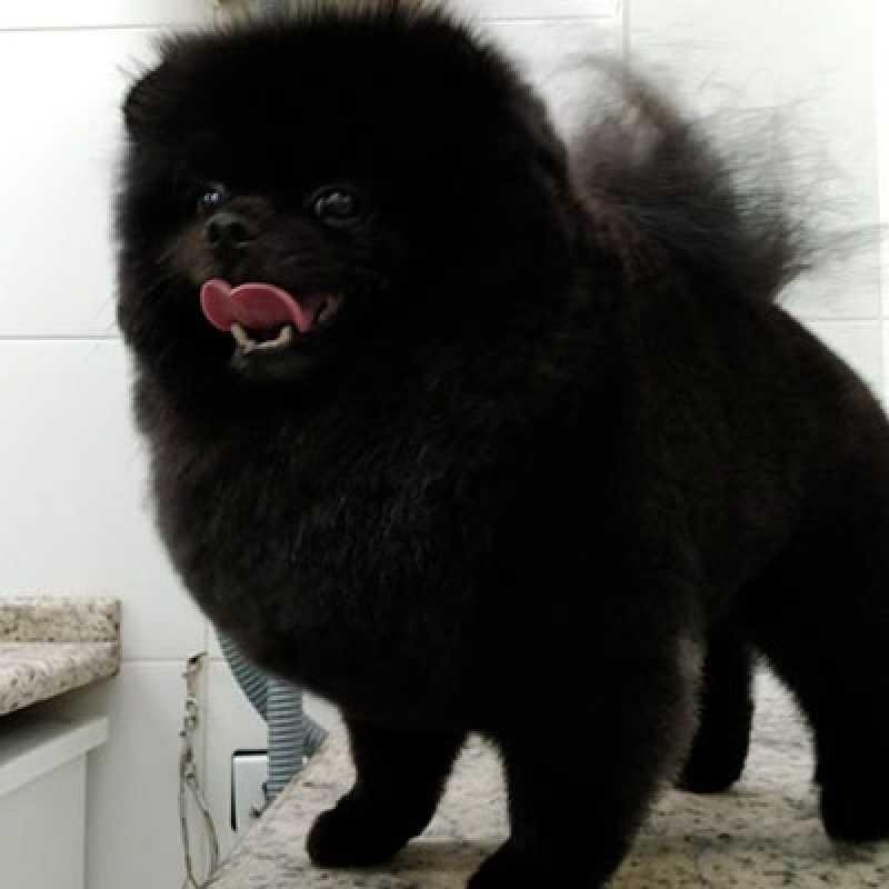 Tosa Cães Orçamento Bela Cintra - Tosa para Cachorro