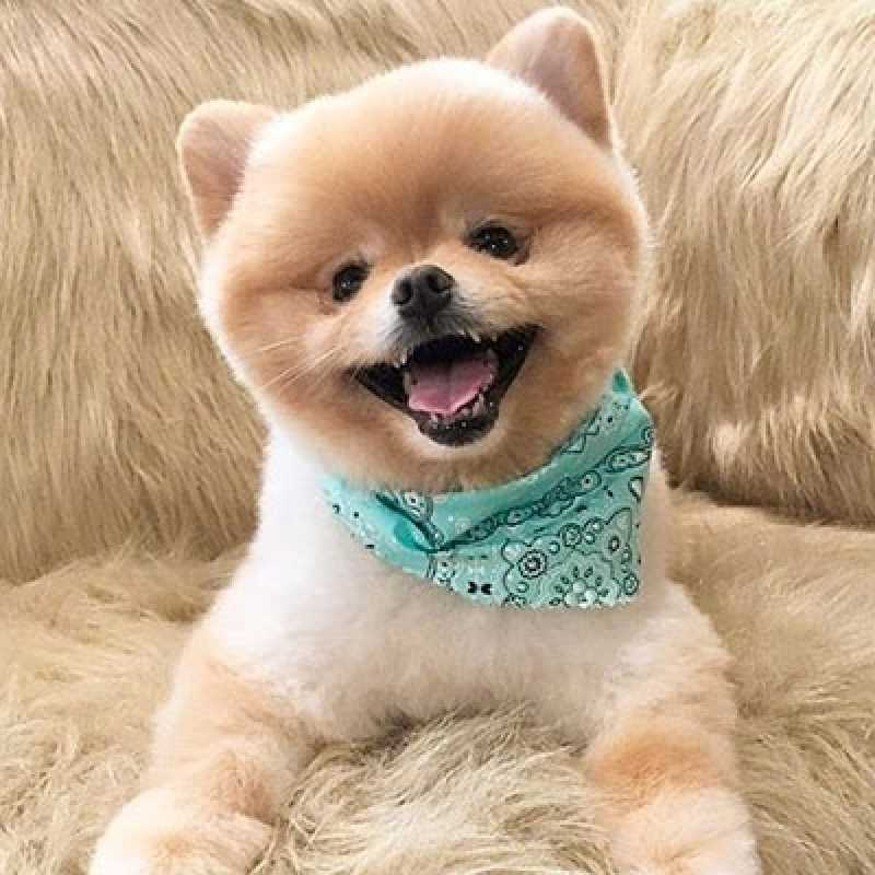 Tosa para Pets Orçamento Perdizes - Tosa Pet