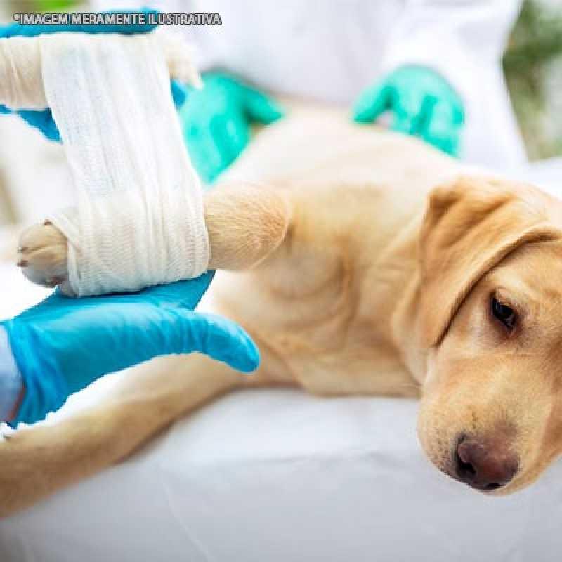 Tratamento de Ortopedia para Cachorro Alto de Pinheiros - Ortopedia para Gatos