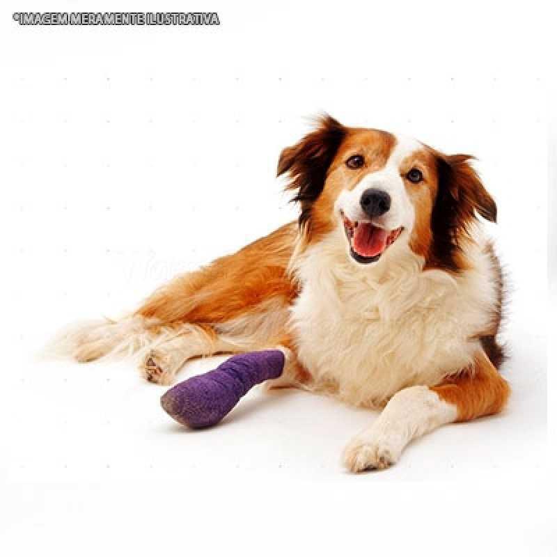 Tratamento de Ortopedia Veterinária Santana de Parnaíba - Ortopedista para Animal