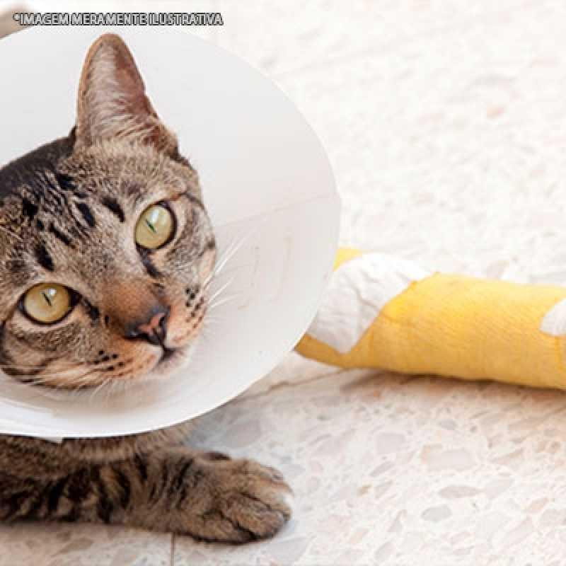 Tratamento de Ortopedista para Gatos Tamboré - Ortopedista de Gatos