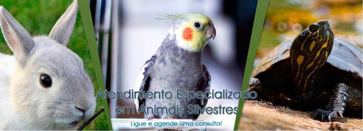 ultrassom-caes-encrenquinhas-banner3
