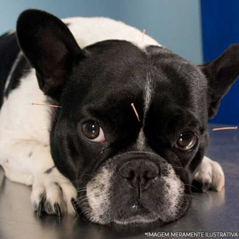 Valores de Acupuntura em Cachorro com Labirintite Jardim América - Acupuntura Fisioterapia Veterinária